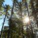 Massachusetts Forest Alliance