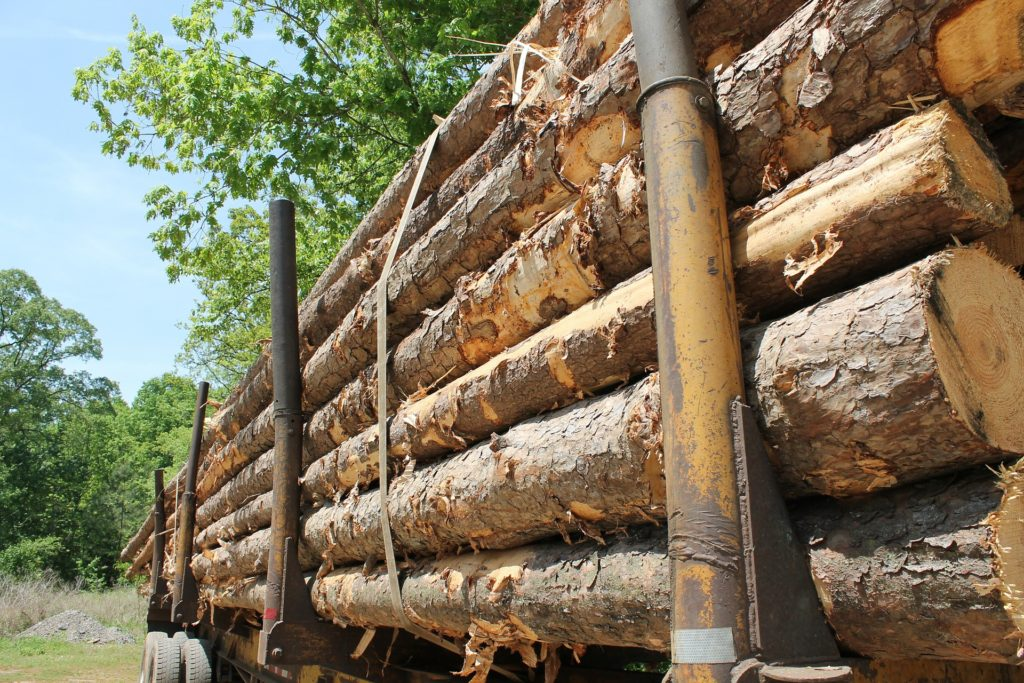 Harvesting Timber?  Think Taxes workshop @ Conservation Center