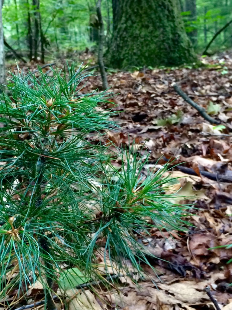 Do You Have the Tools to Keep New Trees Alive webinar @ online
