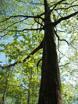 Harvard Forest Summer Institute for Teachers @ Harvard Forest