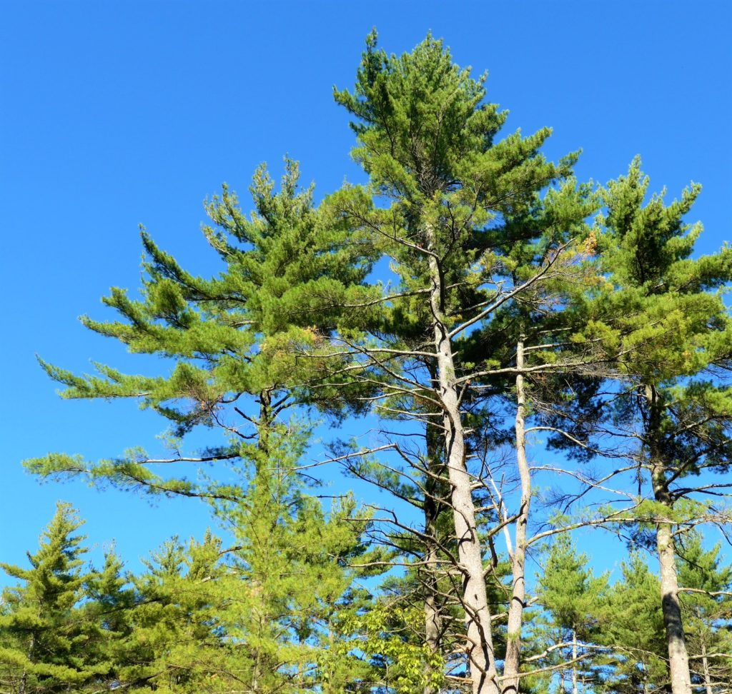 Good Forestry in New Hampshire Workshop @ Bartlett Experimental Forest