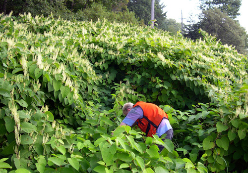 Invasive Plants webinar for  Landowners @ online