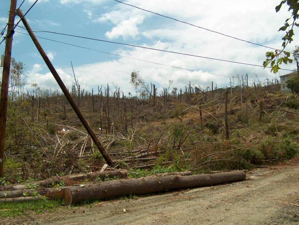 Tax Deduction Rules for Casualty Losses of Timber & Landscape Trees webinar @ online