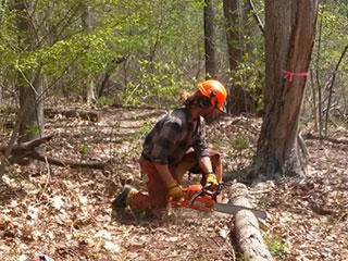 Chainsaw Use and Safety Training @ Hunnewell Building, Arnold Arboretum