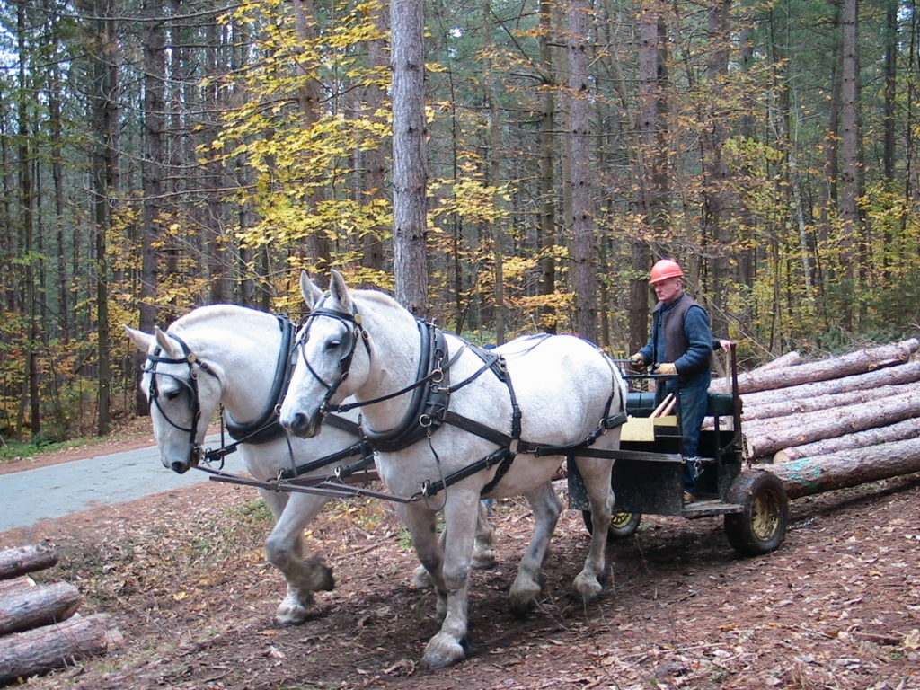 Horse Logging Workshop & Forest Management Demonstration @ Cornish Fairgrounds