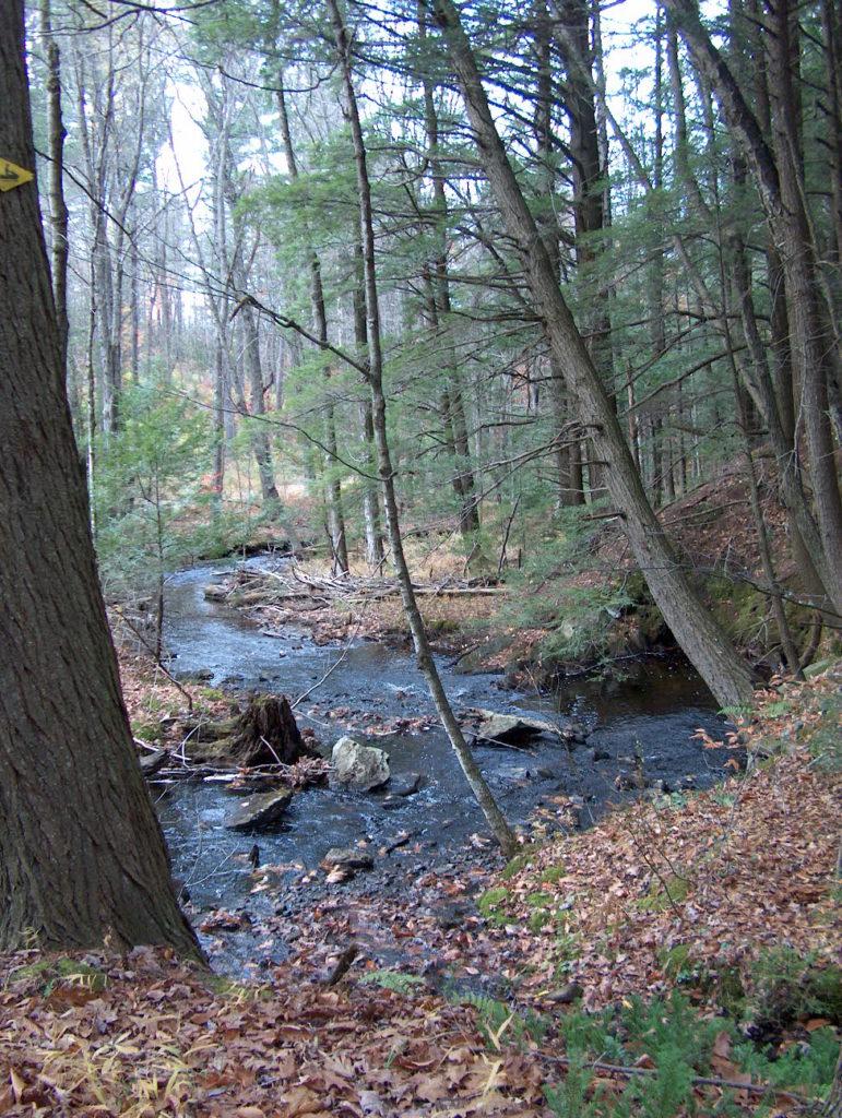 Trees for Trout: Streamside Forest Buffers webinars @ online