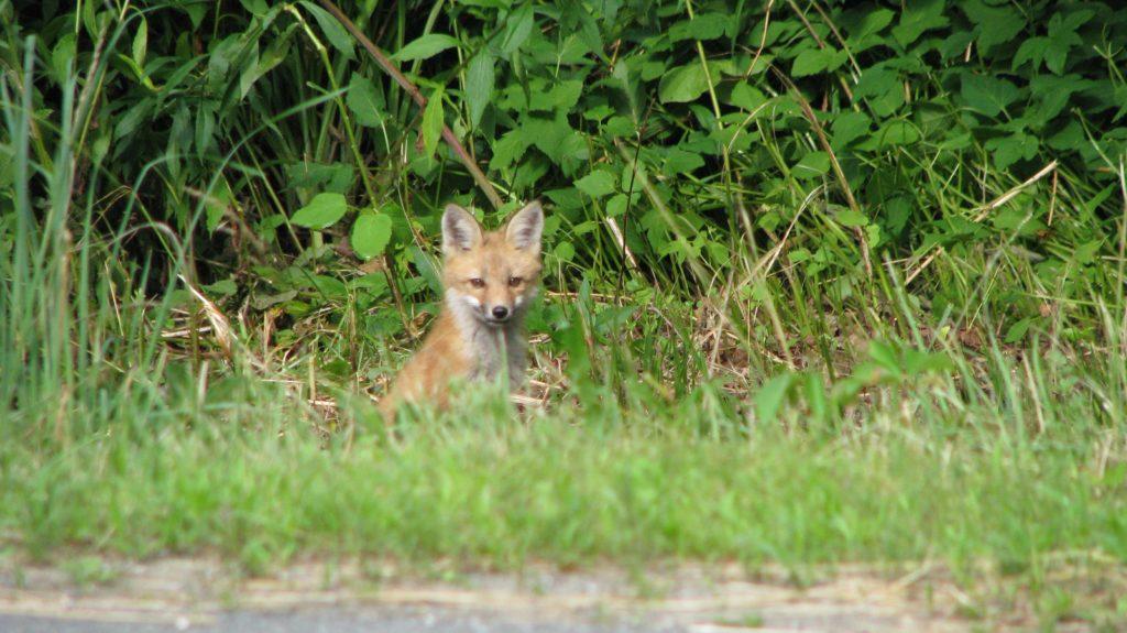 Capturing Critters with Wildlife Cameras workshop @ Bullitt Reservation