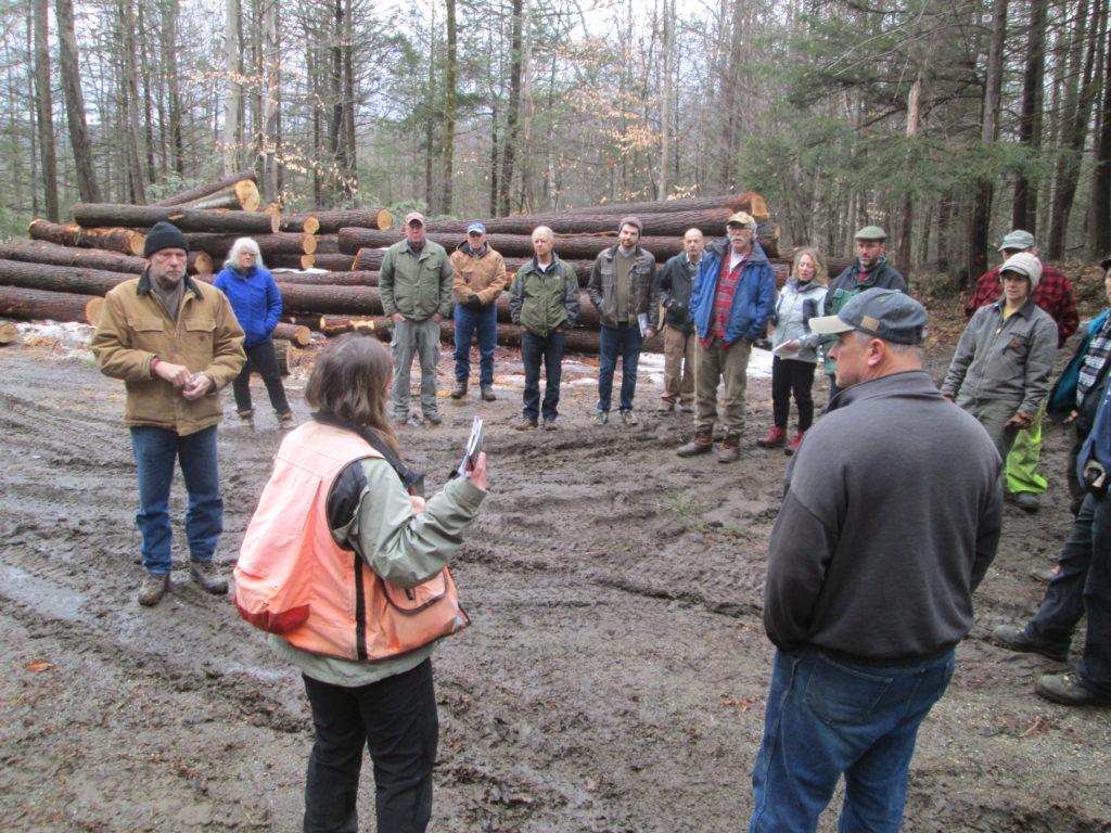 Let's Talk About the Woods webinars @ online