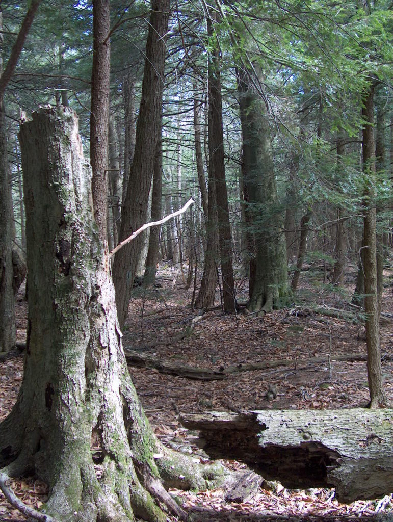 Dead Wood & Forest Management webinar @ online