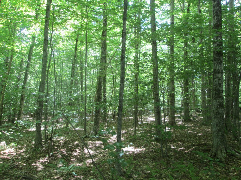 Tree Age Silviculture for Foresters webinars @ online