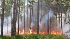 Fire in Landscape Management webinar @ online