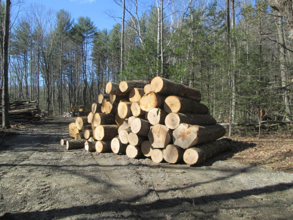 Woodlot Valuation and Economics webinar @ online