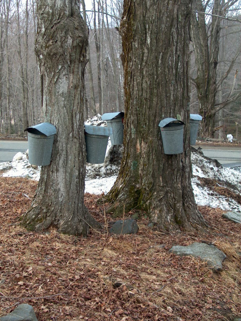 Getting Started in Maple Syrup Production  webinars @ online
