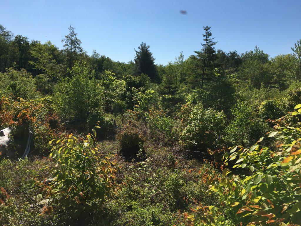 Recognizing and Managing Wildlife Habitat on your Land workshop @ Burley Farms