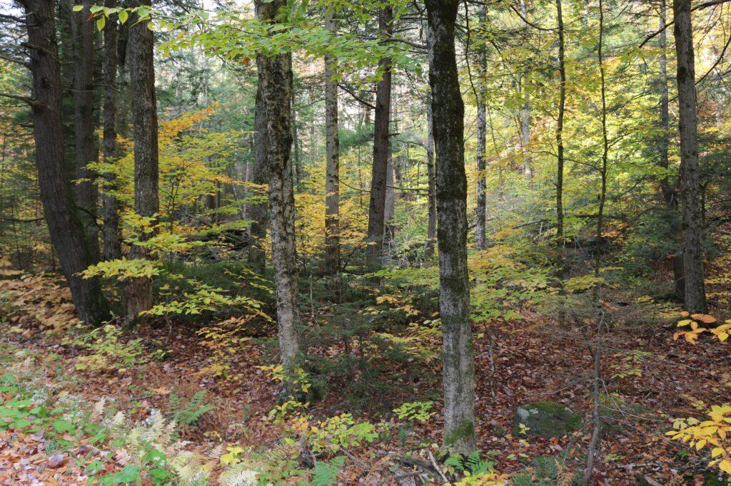 Jargon in forestry webinar @ online