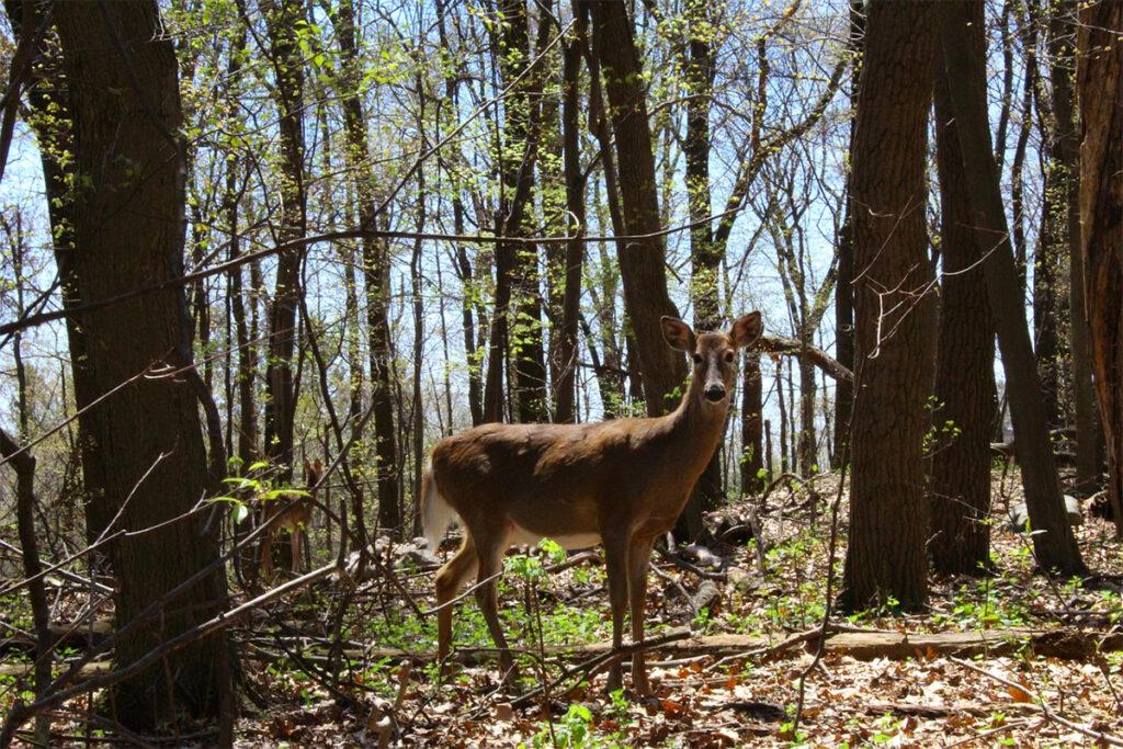 Wildlife Enterprises on Private Lands webinar @ online