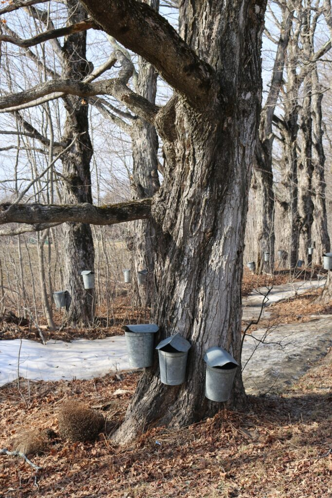 Beginner Maple Sugaring online workshop @ online
