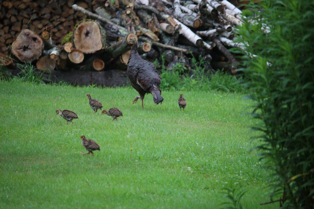 Wildlife Habitat: Tree Nuts for Turkeys & Other Wildlife tour