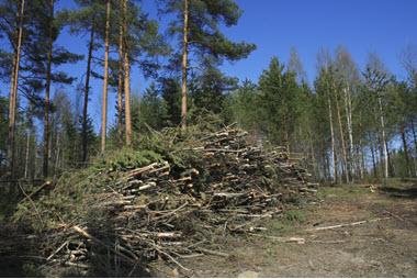 Biomass Utilization Centers: a New Approach for Optimal Forest Management webinar @ online