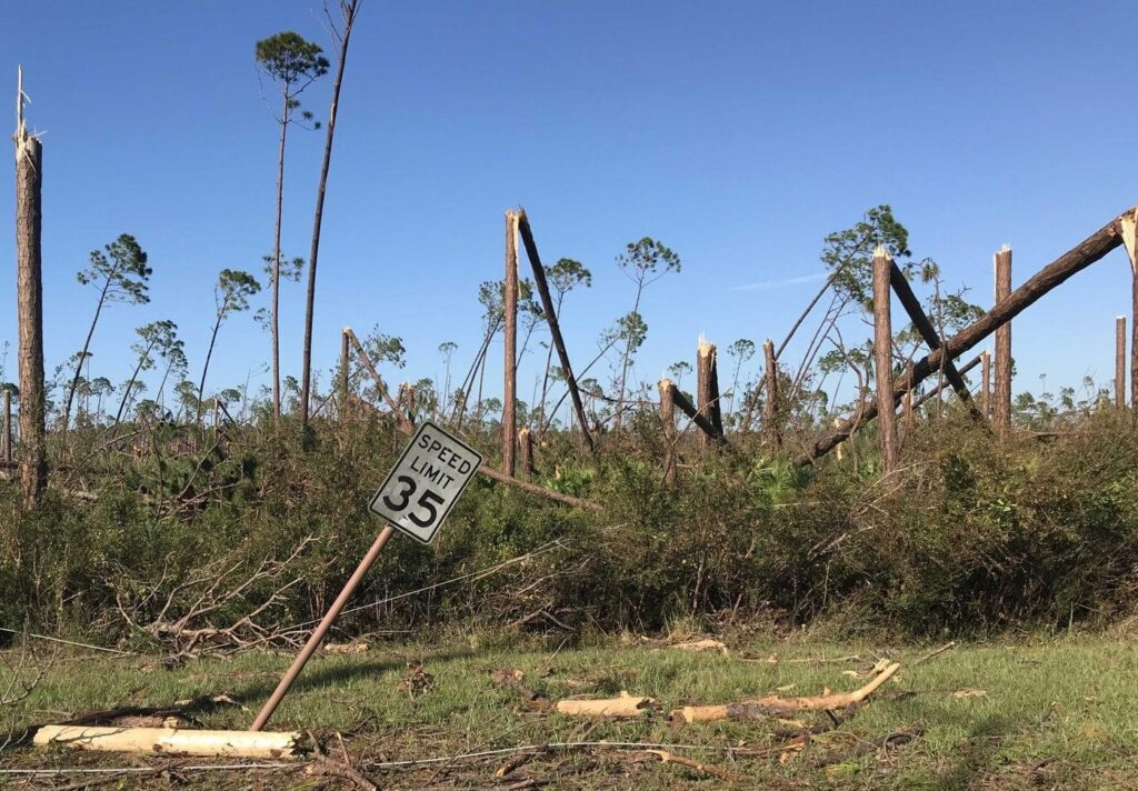 Assessing Storm Damaged Pine Stands webinar @ online