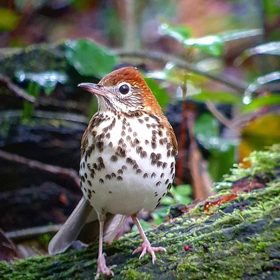 The Power of Birds in Driving and Sustaining Forest Management webinar @ online